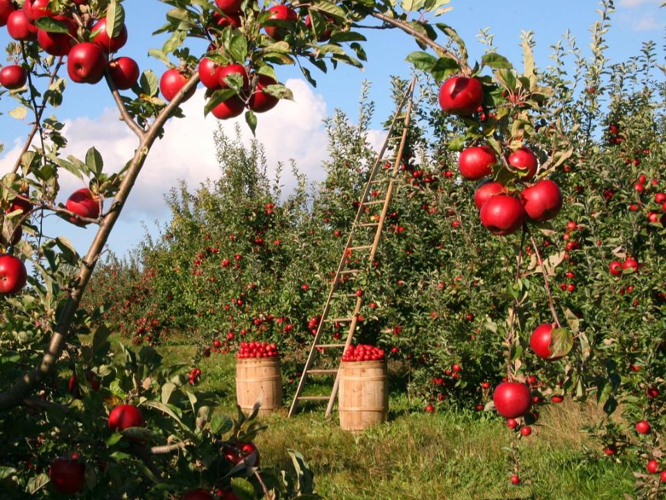 【農業觀測站】作物生產整合管理(IPM)的「工具箱」:未來研究展望