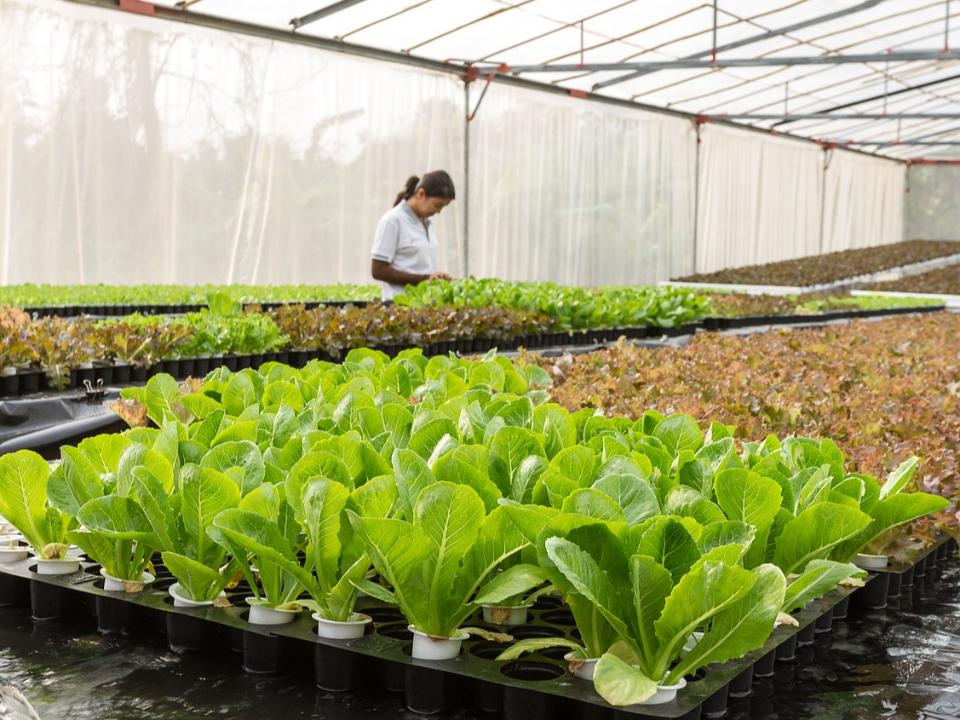 【農業觀測站】屋頂菜園可靠嗎?要多大的空間才能自給自足?
