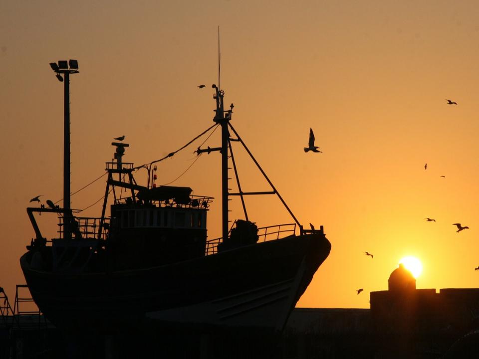 【農業觀測站】麥肯錫報告:資訊科技輔助資源管理,達成永續漁業